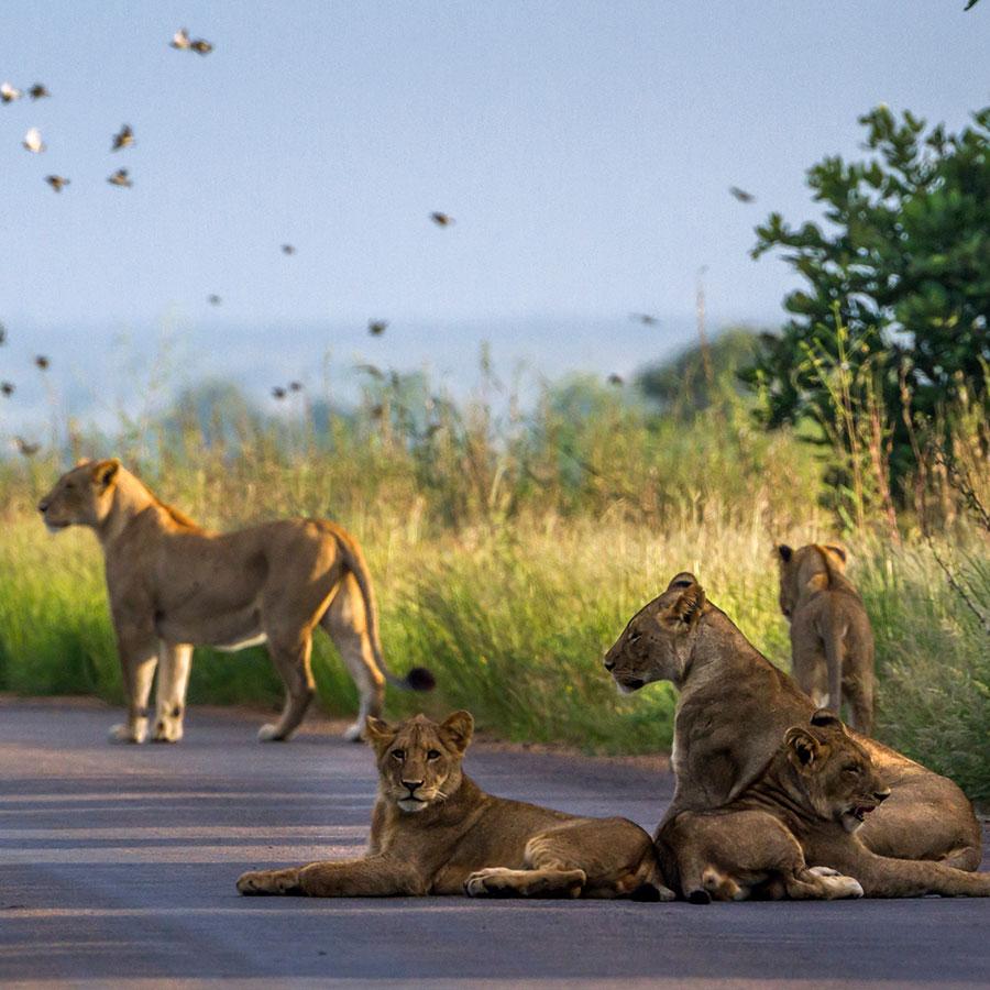 Mozambique Limpopo National Park