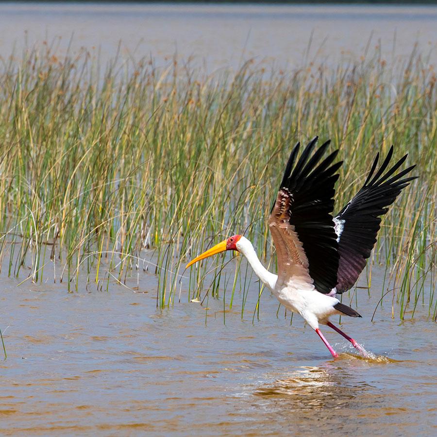 Mozambique Maputo Special Reserve