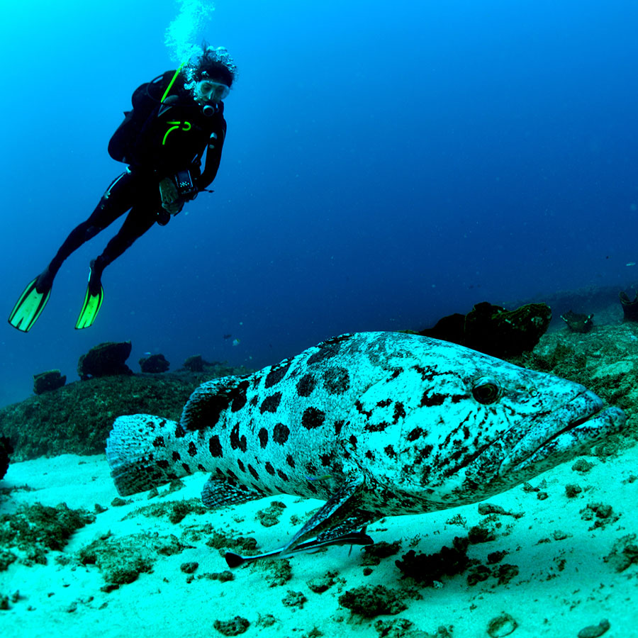 Sense of Oceans Mozambiqie Activities Scuba diving